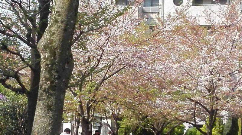 宮下公園の葉桜
